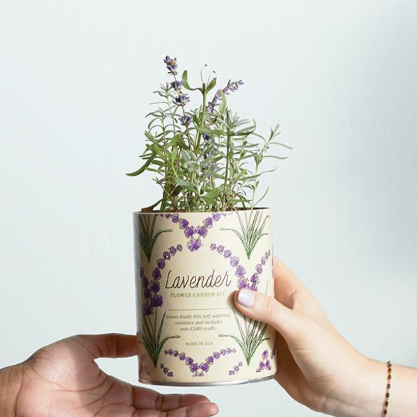 Waxed Planter - Lavender