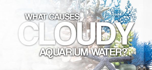 Why Is My Aquarium Water Cloudy?