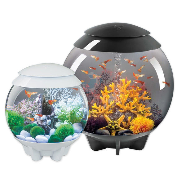 Upgrading Your BiOrb Aquarium
