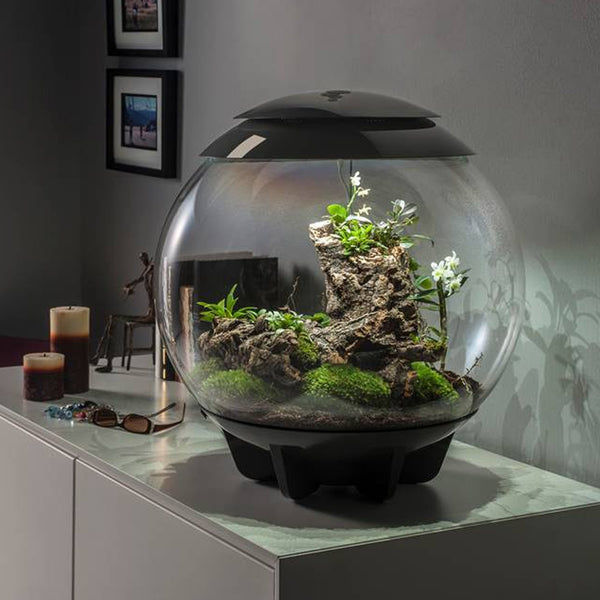 biOrbAIR | The Self-Sustaining Automatic Terrarium from biOrb