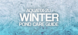 Winter Pond Keeping Guide