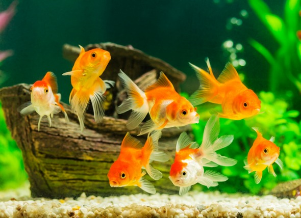 The Essential Checklist for your Aquarium