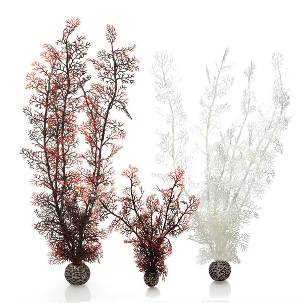 Oase biOrb Sea Fan Aquarium Plants