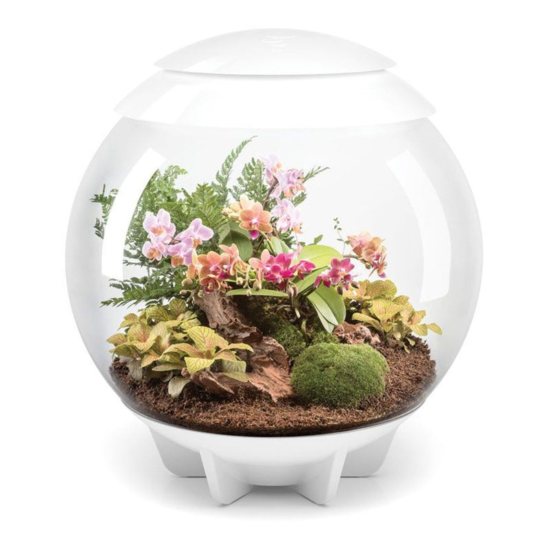 biOrb AIR 60L Terrariums