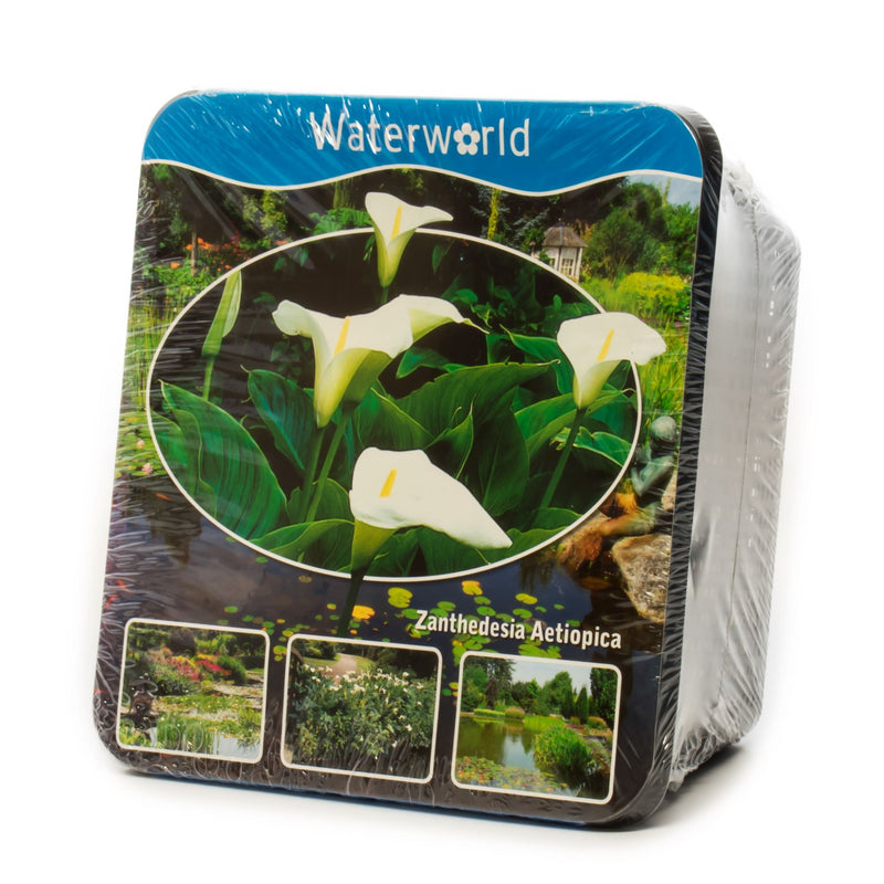 Waterworld Pond Plant Starter Planting Kits
