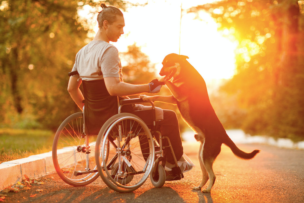 Man in wheelchair with dog who uses disposable underpads