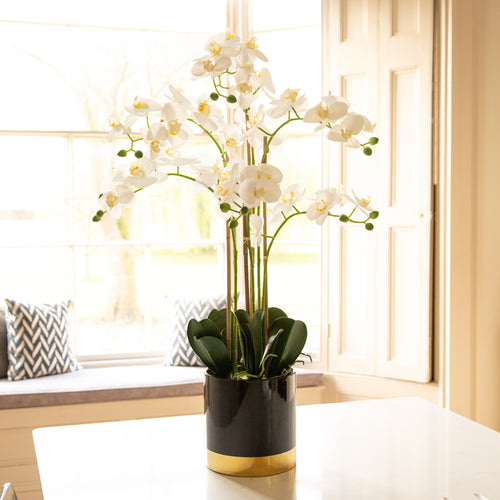Orchid with black and gold pot 80cm