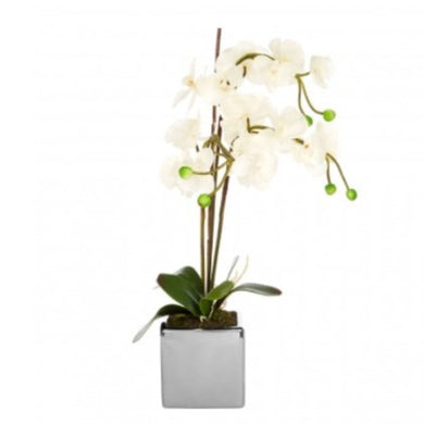 Faux White Orchid in Silver Pot 66cm