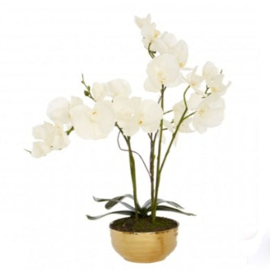 Faux White Orchid in Gold Pot 45cm