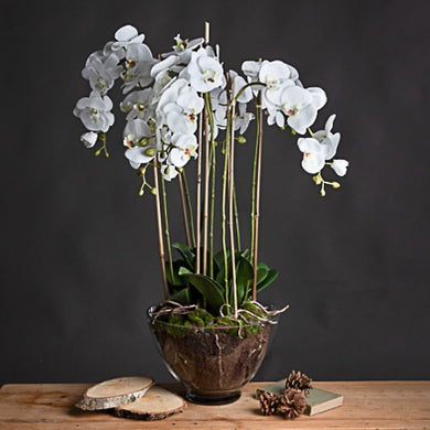 Luxury Faux Orchid in Glass Pot