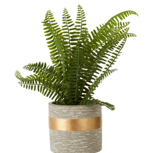Potted Fern in Grey Ceramic Pot 31cm