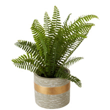 Load image into Gallery viewer, Potted Fern in Grey Ceramic Pot 31cm