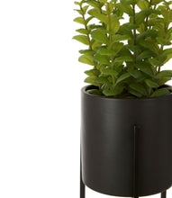 Load image into Gallery viewer, Thyme in Black Ceramic Pot with Stand 30cm