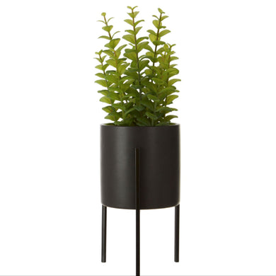 Thyme in Black Ceramic Pot with Stand 30cm