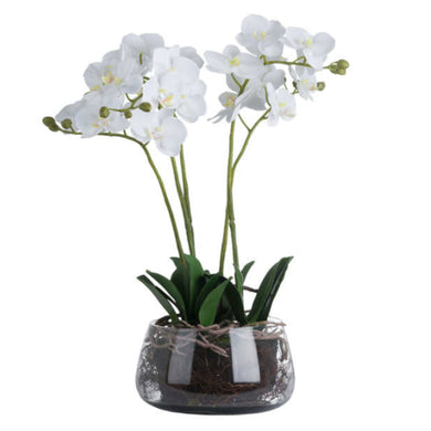 Luxury Medium White Orchid in Glass Pot 61cm