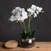 Load image into Gallery viewer, Luxury Medium White Orchid in Glass Pot 61cm