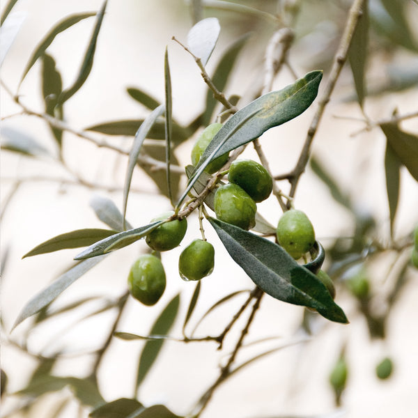 NiKEL Mild Exfoliant with Olive Tree