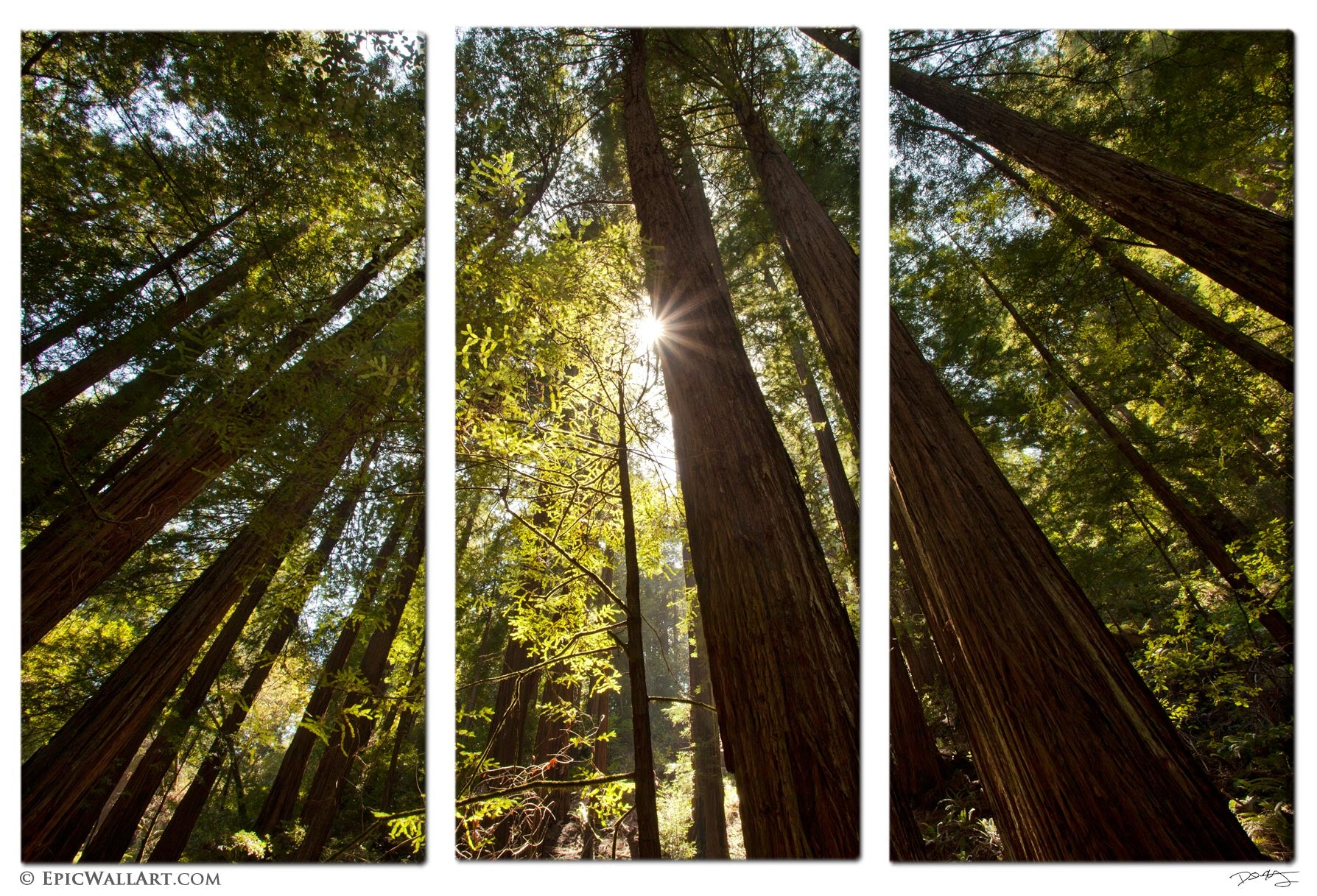 towering forest sunlight sunlight bursts through the towering redwood trees in this colorful and inspiring natural scene captured at muir woods national monument