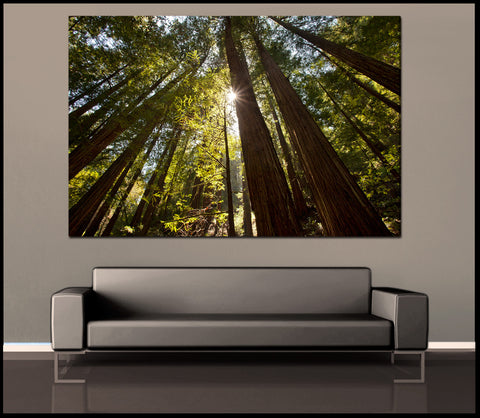 """Redwood Forest Sunlight"" Muir Woods Fine Art Gallery Wrapped Canvas Print"