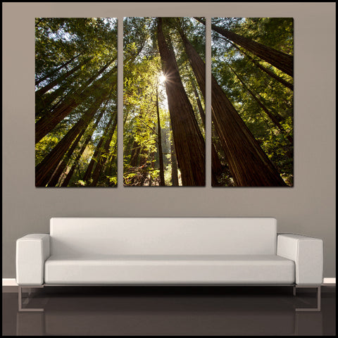 """Towering Forest Sunlight"" Tryptich 3-Piece Fine Art Canvas Wall Mural"