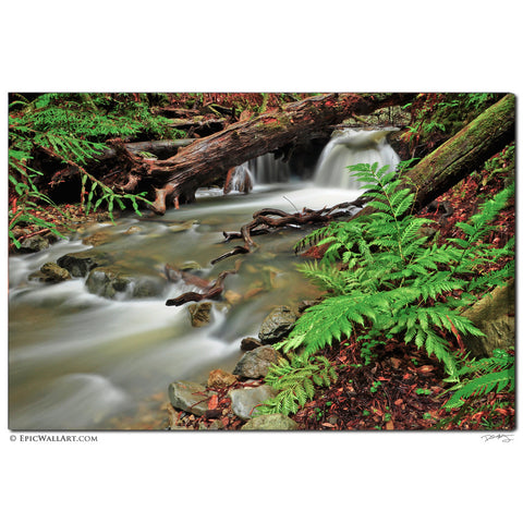 """Flowing Fern Forest"" Muir Woods Fine Art Gallery Wrapped Canvas Print"