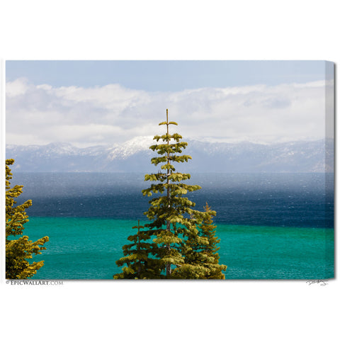 """Tahoe Pine"" Lake Tahoe Fine Art Gallery Wrapped Canvas Print"