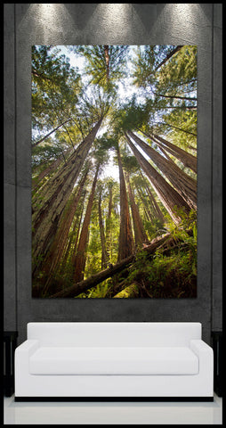 """The Towering Forest"" Muir Woods Fine Art Gallery Wrapped Canvas Print"