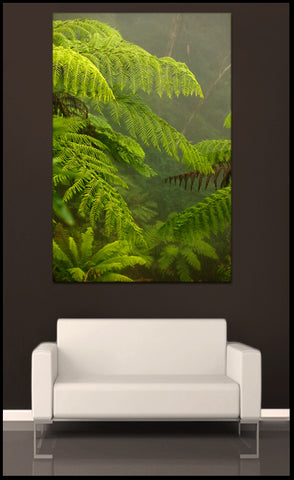 """Foggy Fern Forest"" Blue Mountains Fine Art Gallery Wrapped Canvas Print"