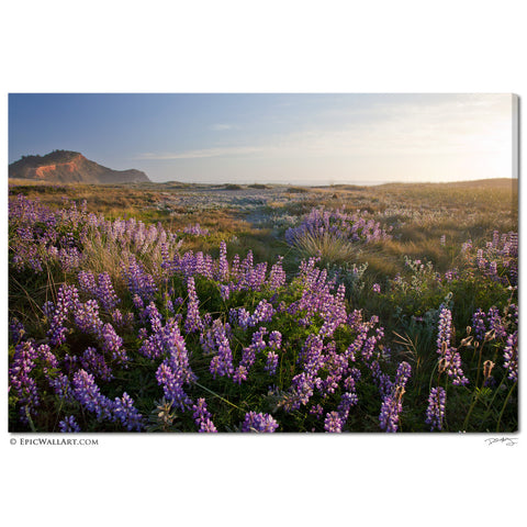 """Coastal Wildflowers"" California Fine Art Gallery Wrapped Canvas Print"