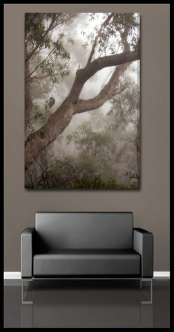 """The Foggy Forest"" Blue Mountains Fine Art Gallery Wrapped Canvas Print"