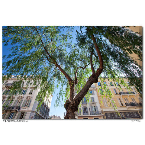 """French Riviera Tree"" Nice Fine Art Gallery Wrapped Canvas Print"