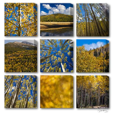 """Golden Aspen Meadow"" Signature Limited Eidtion 9-Piece Fine Art Gallery Wrapped Canvas Set"