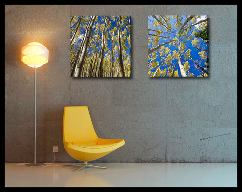"""Golden Aspen Meadow"" 2-Piece Fine Art Canvas Wall Display"