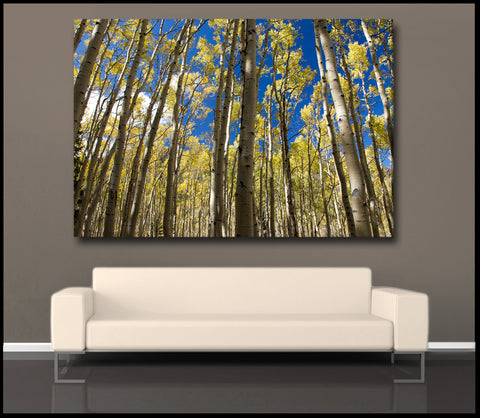"""Golden Aspen Meadow"" Arizona Forest Fine Art Gallery Wrapped Canvas Print"