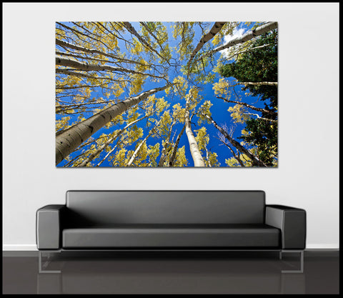 """Golden Aspen Skies"" Lockett Meadow AZ Fine Art Gallery Wrapped Canvas Print"
