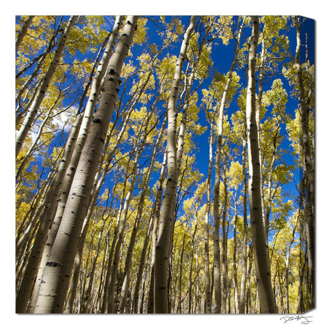 """The Golden Forest"" Square Fine Art Gallery Wrapped Canvas Print"