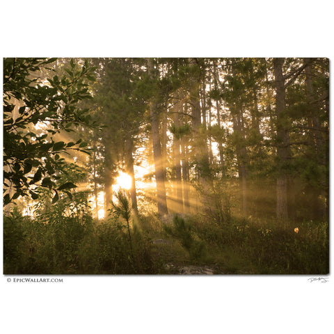 """Golden Forest Sunlight"" Fine Art Gallery Wrapped Canvas Print"