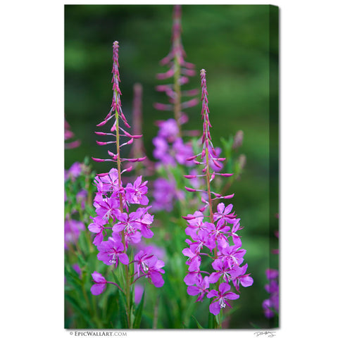 """Mountain Wildflowers"" Jasper Fine Art Gallery Wrapped Canvas Print"