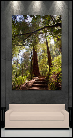"""Redwood Walkway"" Fine Art Gallery Wrapped Canvas Print"