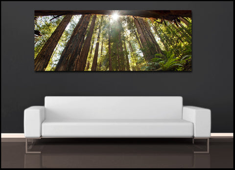 """Redwood Forest Sunlight"" Panoramic Fine Art Gallery Wrapped Canvas Print"