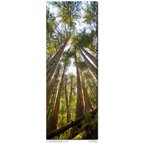 """The Towering Forest"" Vertical Panoramic Fine Art Gallery Wrapped Canvas Print"