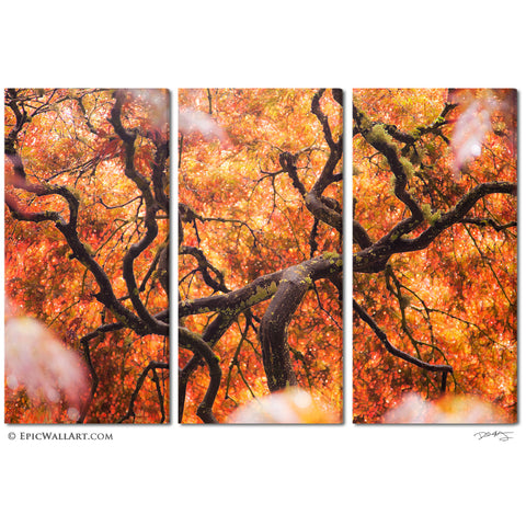"""Tree of Color"" Abstract Nature 3-Piece Fine Art Canvas Wall Display"