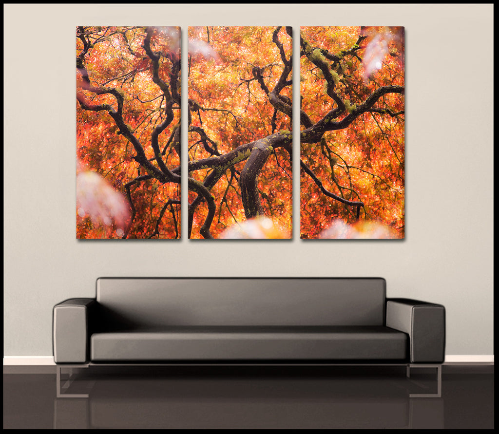Quot Tree Of Color Quot Abstract Nature 3 Piece Fine Art Canvas