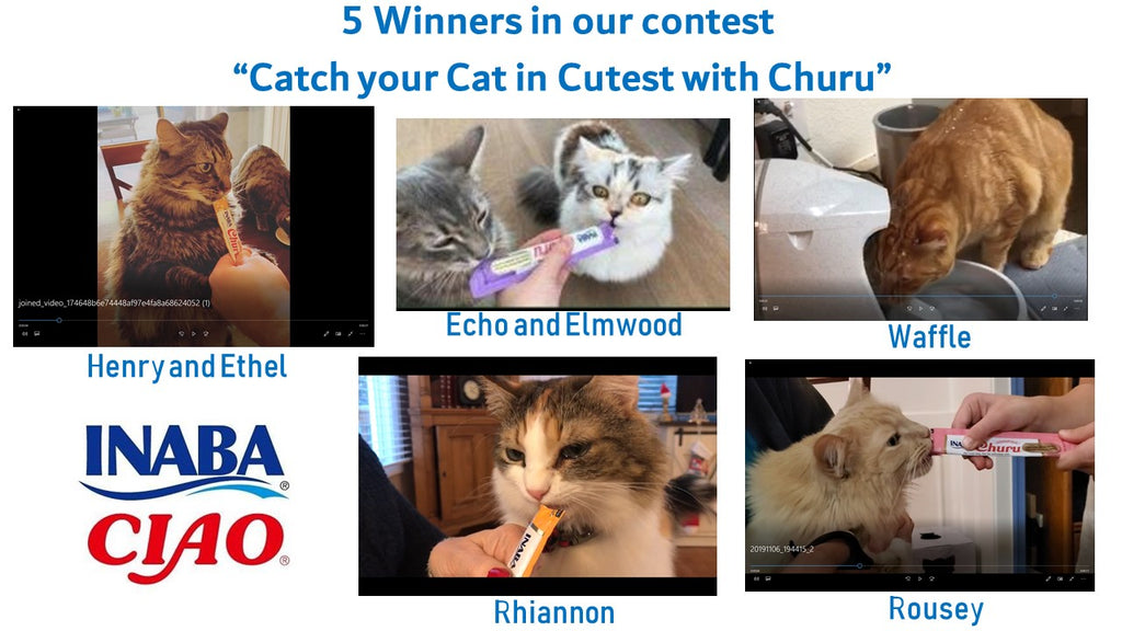 5 Cats are selected as Winners!
