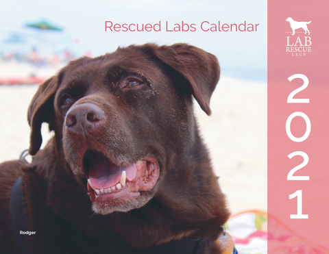 2021 Rescued Labs Calendar