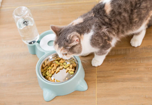 Load image into Gallery viewer, Cat Food and Drinking Water Bowl
