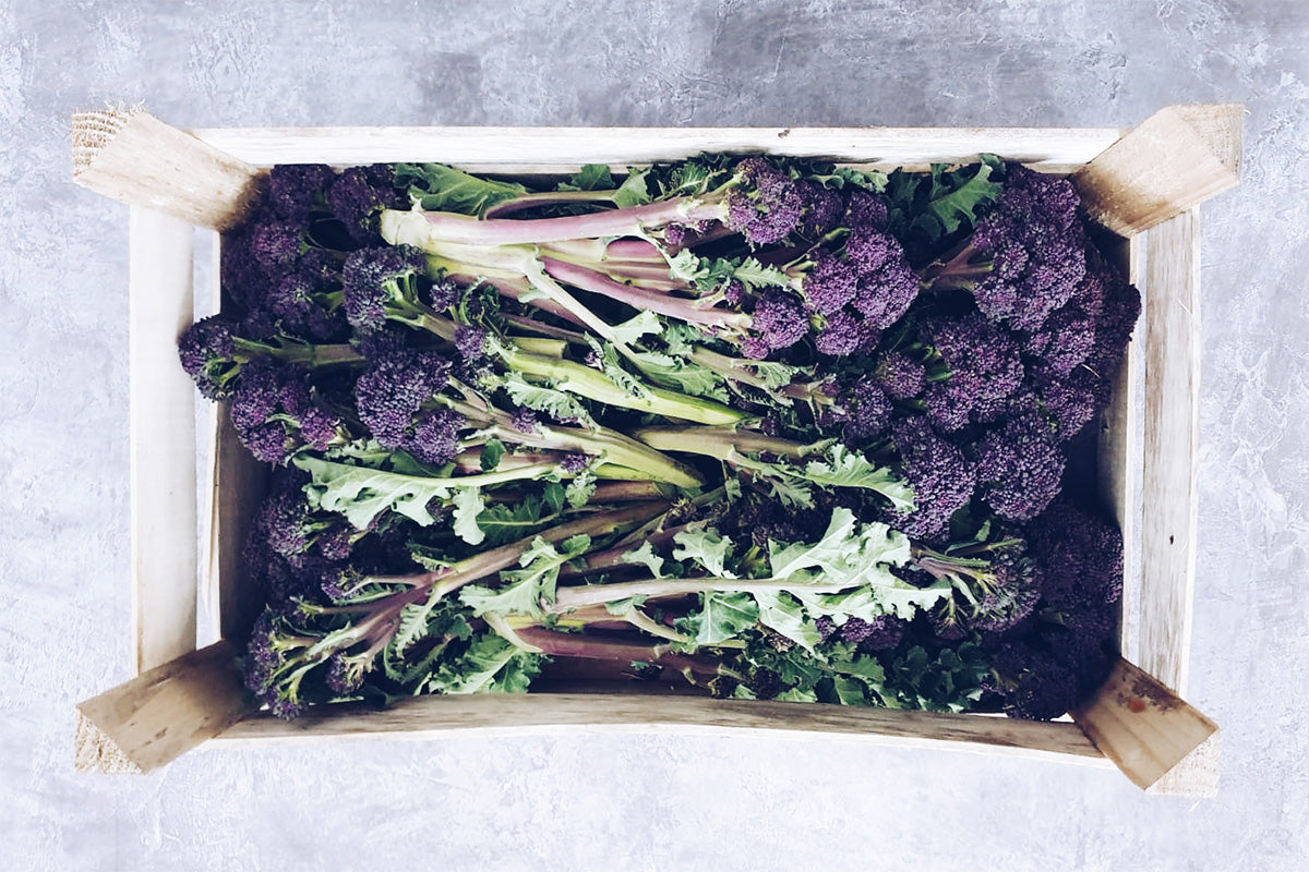purple sprouting broccoli from Cornwall