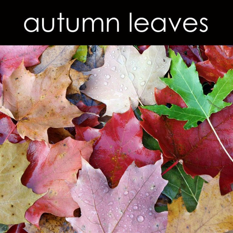 Autumn Leaves Reed Diffuser Refill