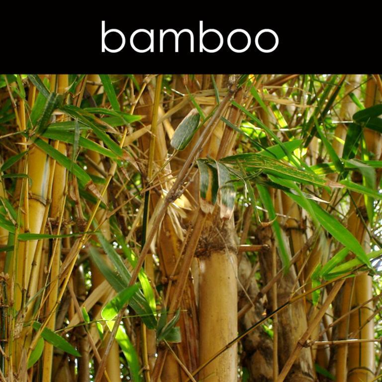 Bamboo Fragrance Oil