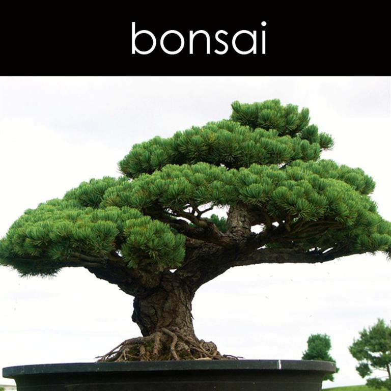 Bonsai Reed Diffuser Refill